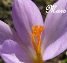 mois-mars-01