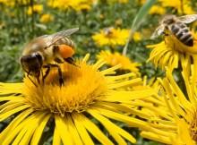 abeilles-01